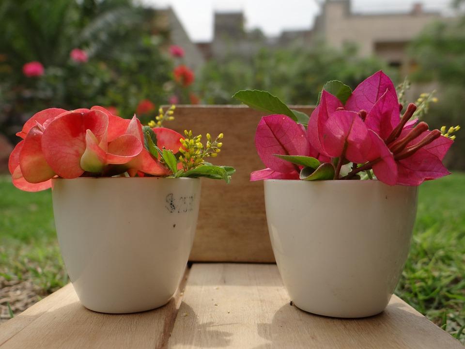 flower-pot-396853_960_720