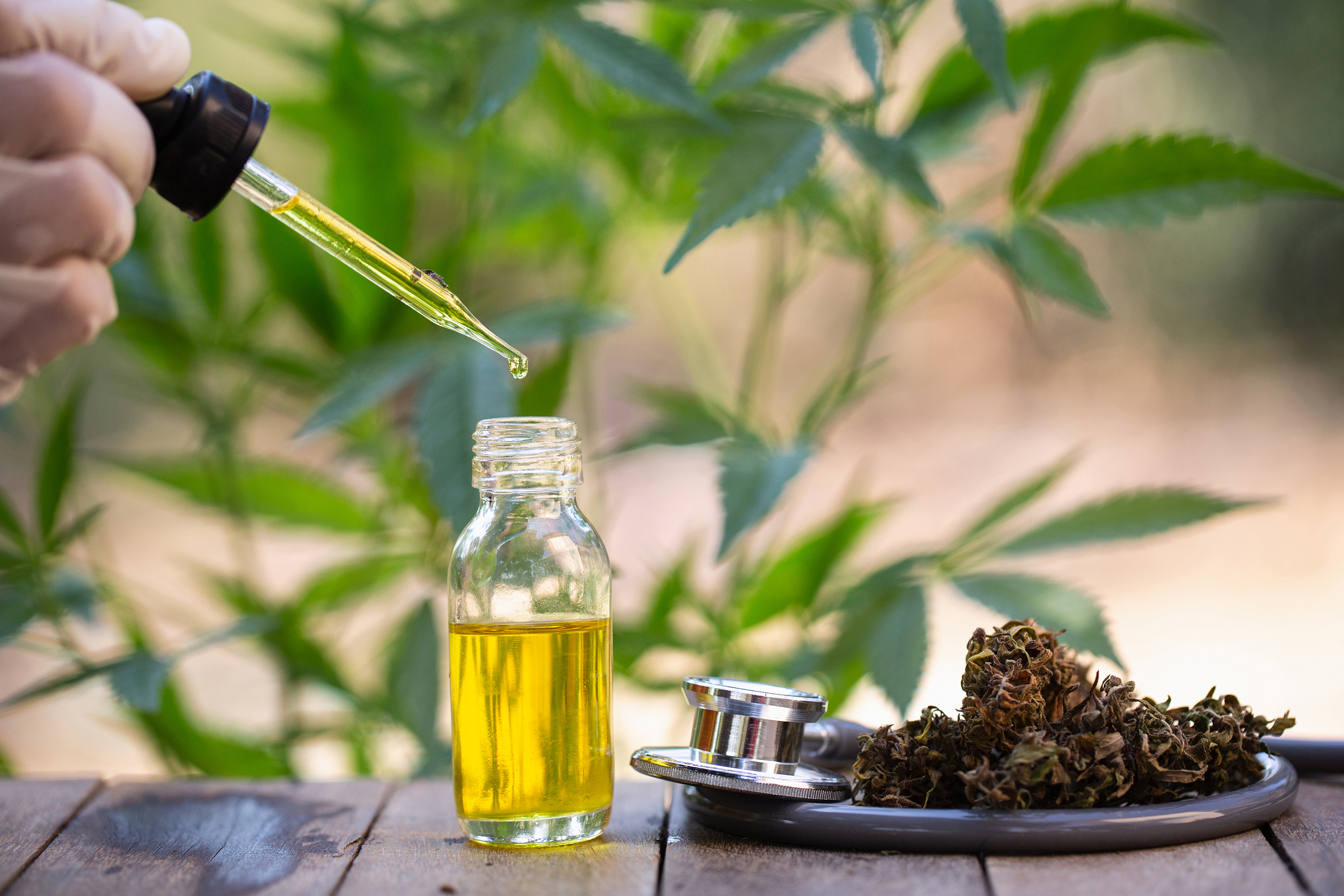 Hemp oil, Medical marijuana products including cannabis leaf, dried bud, cbd  and hash oil over black wood background