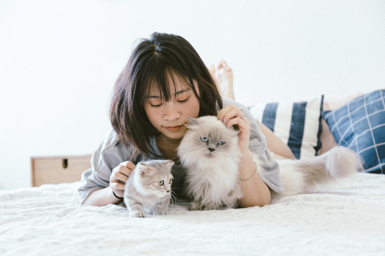 animals-bed-bedroom-2215599