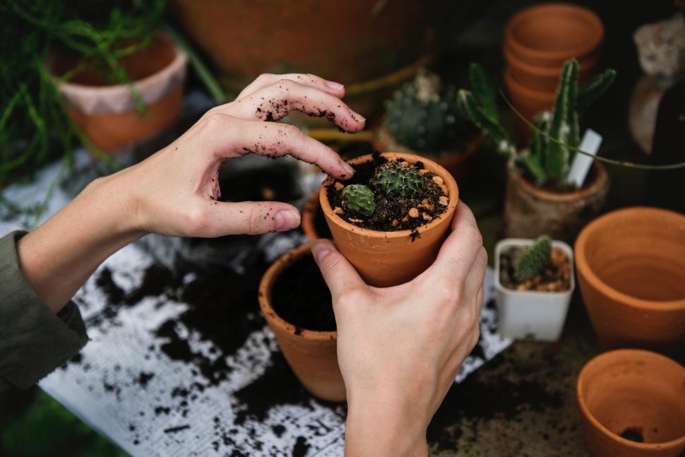 cacti-gardening-grow-707194