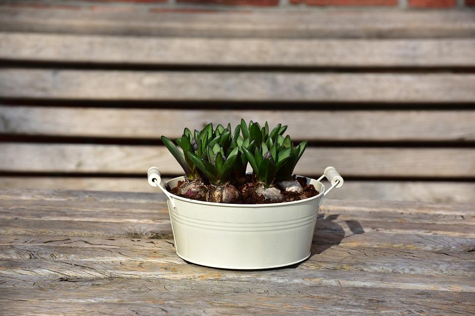flowerpot-1288575_960_720