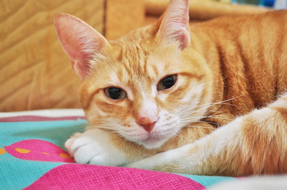 kitty-2336240_960_720