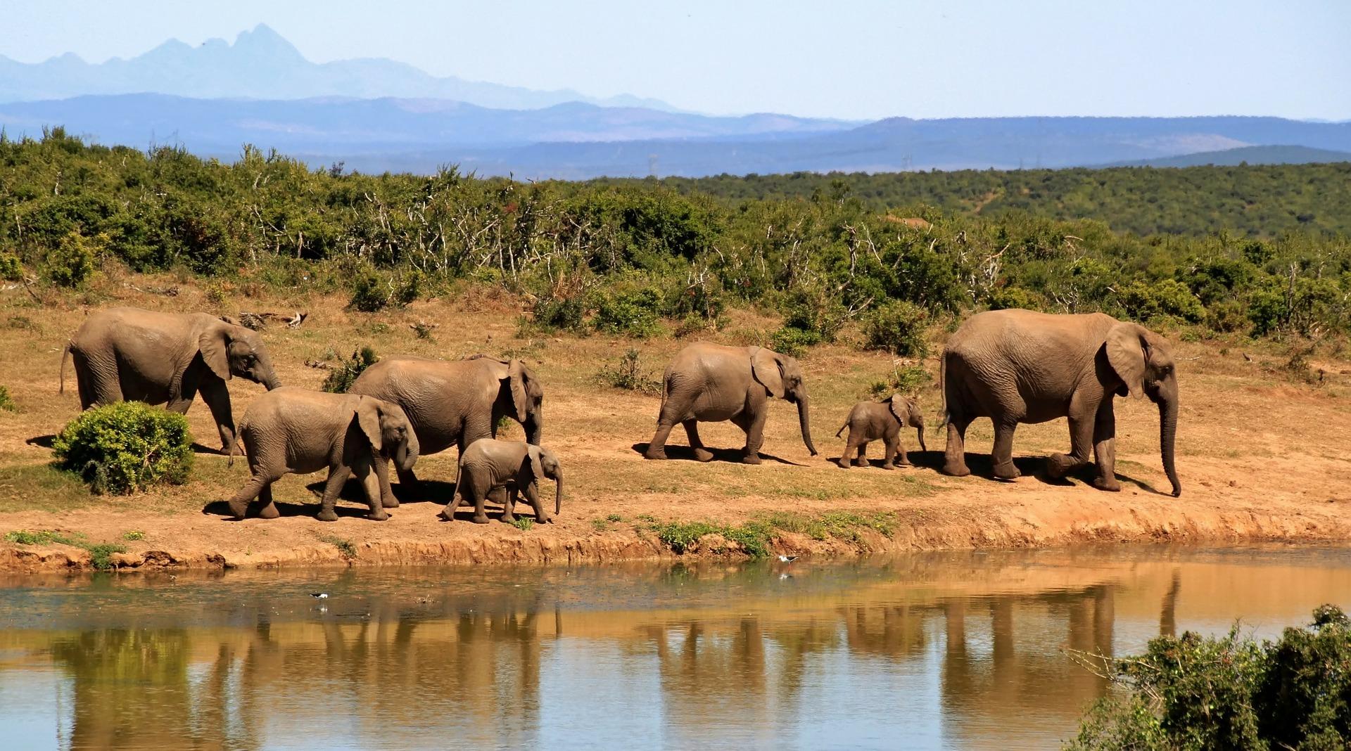 elephant-279505_1920 (1)